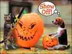 Carve out some wicked fun this Halloween!